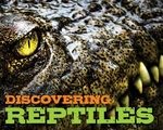 Book cover of DISCOVERING REPTILES HBK