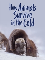 Book cover of HOW ANIMALS SURVIVE IN THE COLD