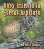 Book cover of BABY ANIMALS IN FOREST HABITATS